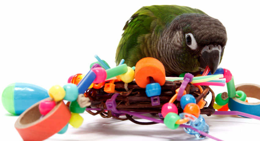 Vogel Verrijking VIP